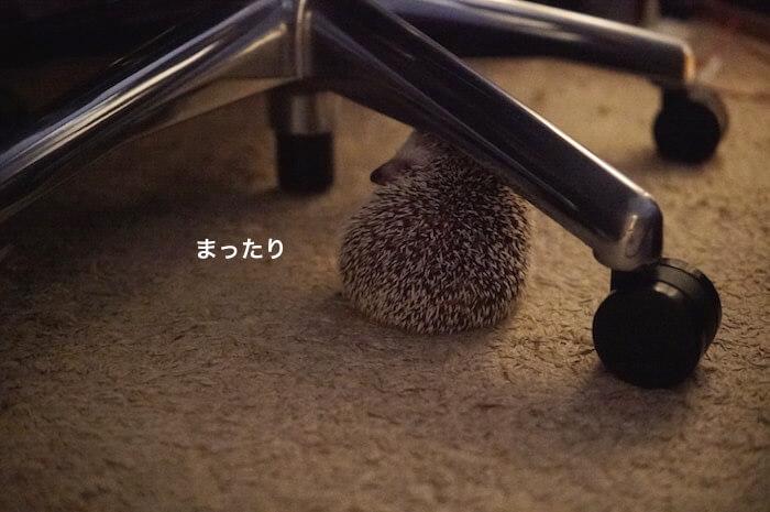 f:id:chikojirou:20170706223349j:plain