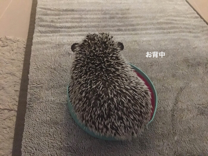 f:id:chikojirou:20170706223429j:plain