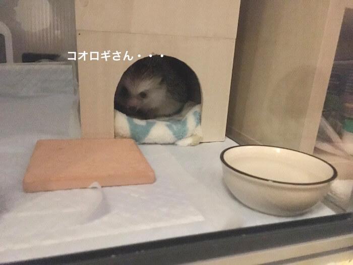 f:id:chikojirou:20170706223443j:plain