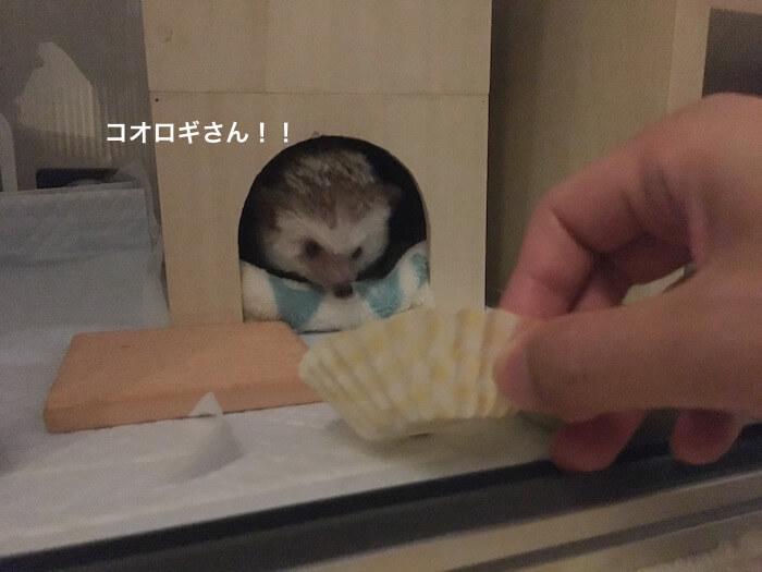 f:id:chikojirou:20170706223512j:plain
