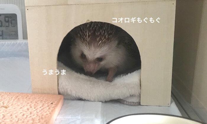 f:id:chikojirou:20170706224042j:plain