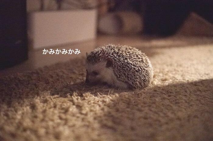 f:id:chikojirou:20170707225453j:plain