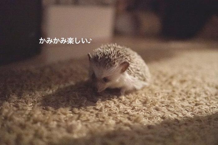 f:id:chikojirou:20170707225503j:plain
