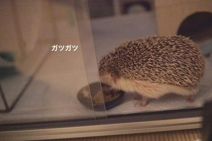 f:id:chikojirou:20170707225514j:plain