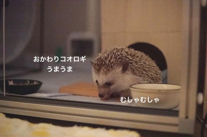 f:id:chikojirou:20170707225610j:plain