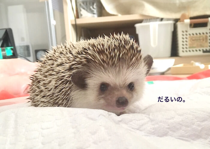 f:id:chikojirou:20170717133118j:plain