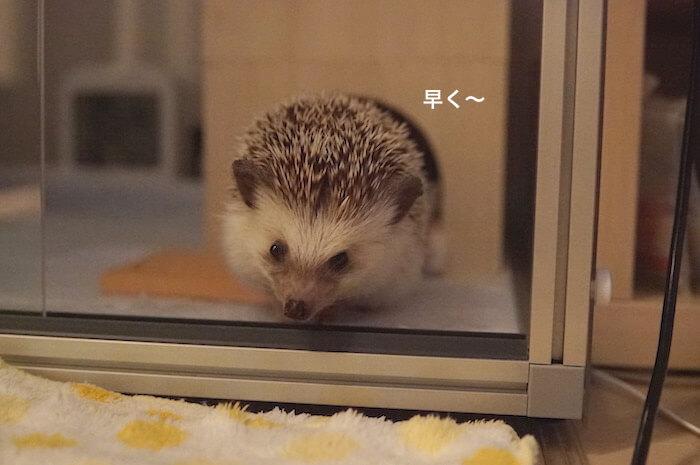 f:id:chikojirou:20170809213307j:plain