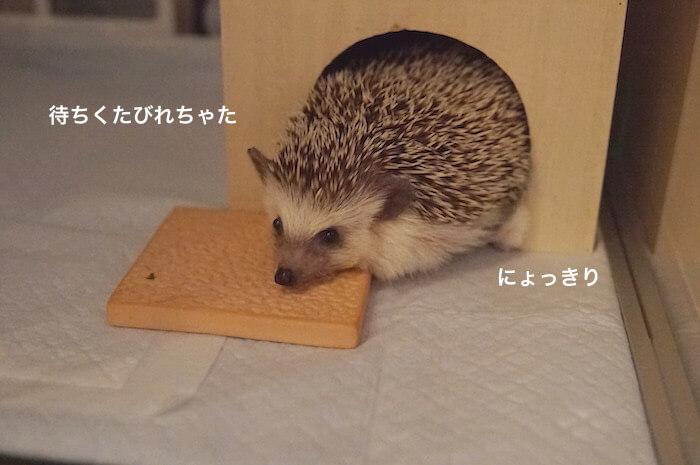 f:id:chikojirou:20170809213320j:plain