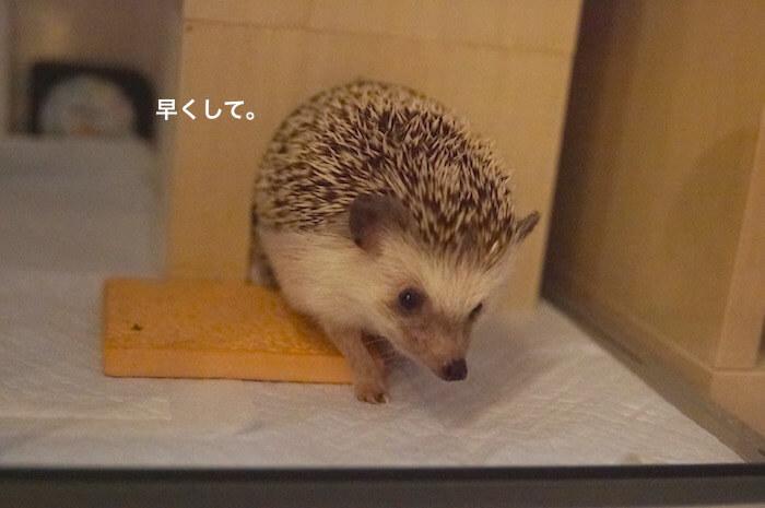 f:id:chikojirou:20170809213337j:plain