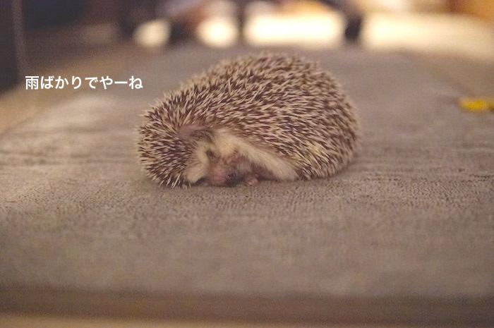 f:id:chikojirou:20170821214150j:plain