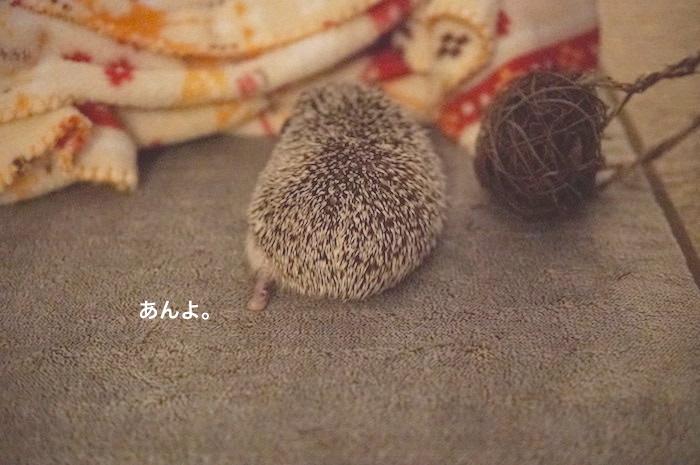 f:id:chikojirou:20170821214229j:plain