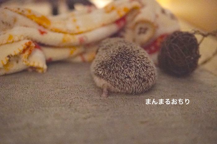 f:id:chikojirou:20170821214246j:plain