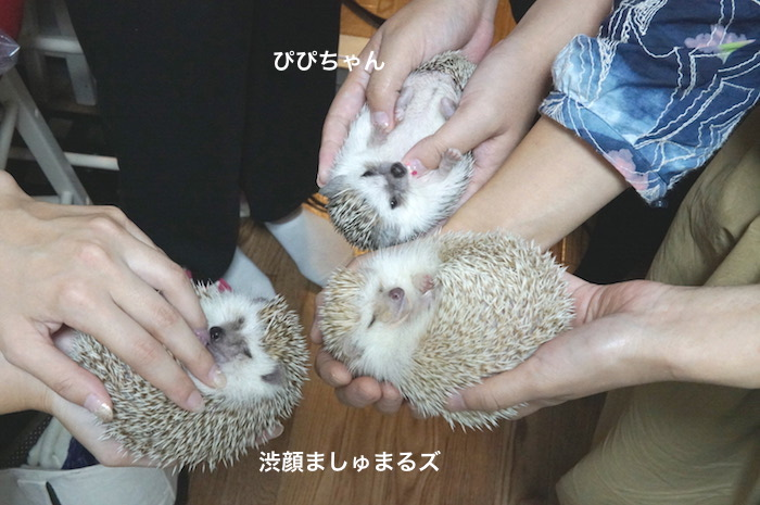 f:id:chikojirou:20170917222345j:plain