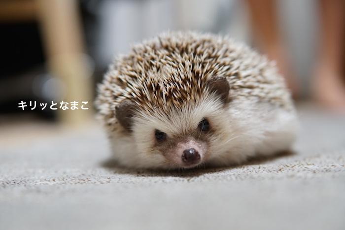 f:id:chikojirou:20171012212727j:plain