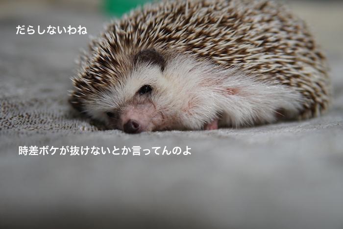 f:id:chikojirou:20171012212749j:plain