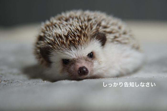 f:id:chikojirou:20171012214000j:plain