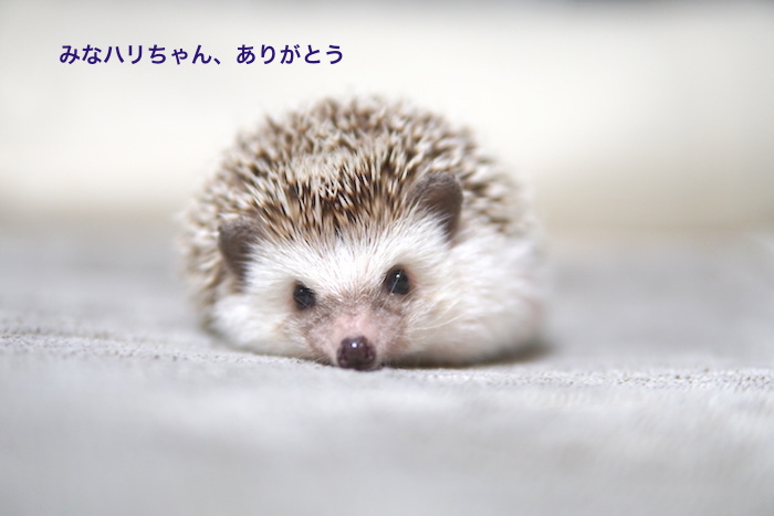 f:id:chikojirou:20171026214156j:plain