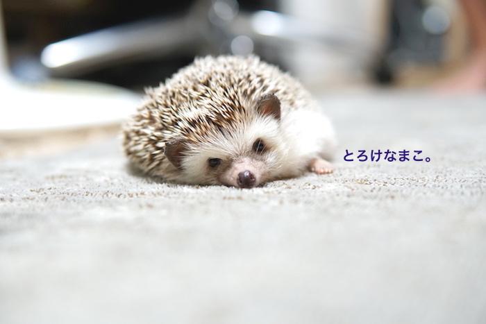 f:id:chikojirou:20171026222141j:plain