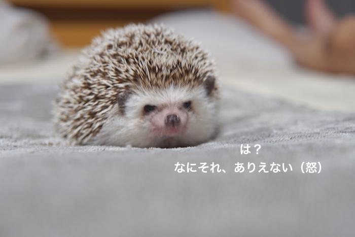 f:id:chikojirou:20171203143653j:plain