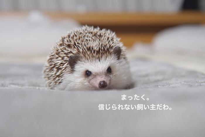 f:id:chikojirou:20171203143709j:plain