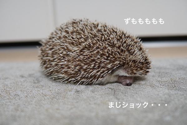 f:id:chikojirou:20180112220603j:plain
