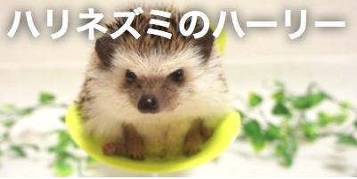 f:id:chikojirou:20180115102619p:plain