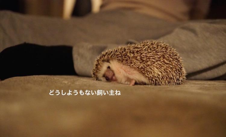f:id:chikojirou:20180119220052j:plain