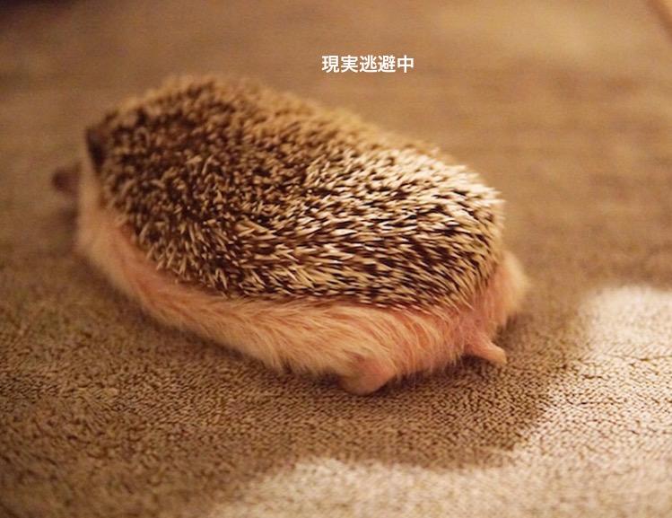 f:id:chikojirou:20180119220138j:plain