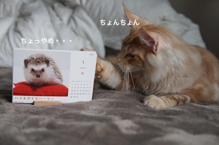 f:id:chikojirou:20180121211728j:plain