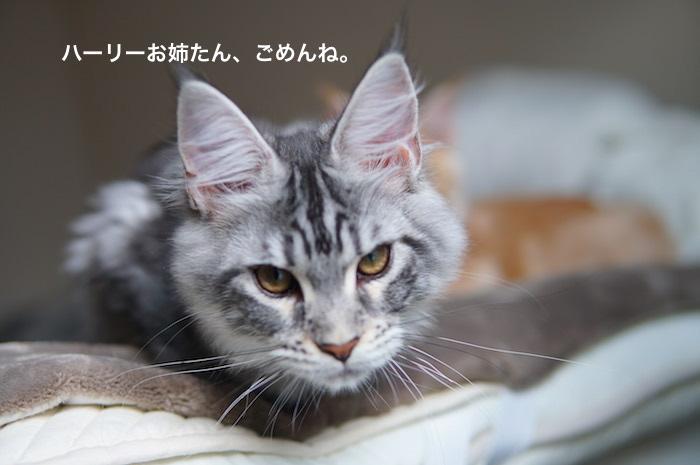 f:id:chikojirou:20180121211754j:plain