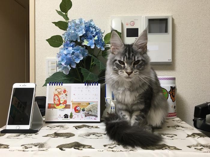 f:id:chikojirou:20180121211956j:plain