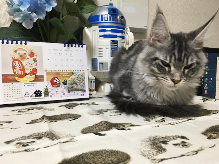 f:id:chikojirou:20180121212010j:plain