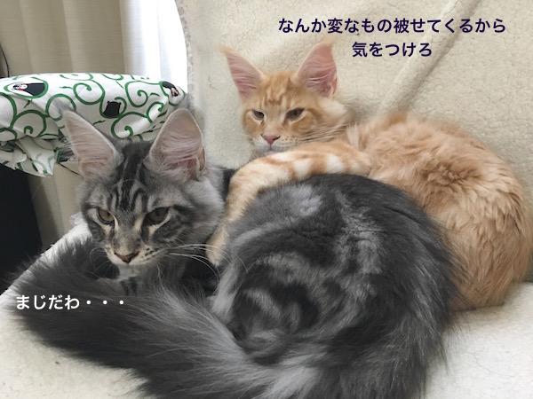 f:id:chikojirou:20180129214844j:plain