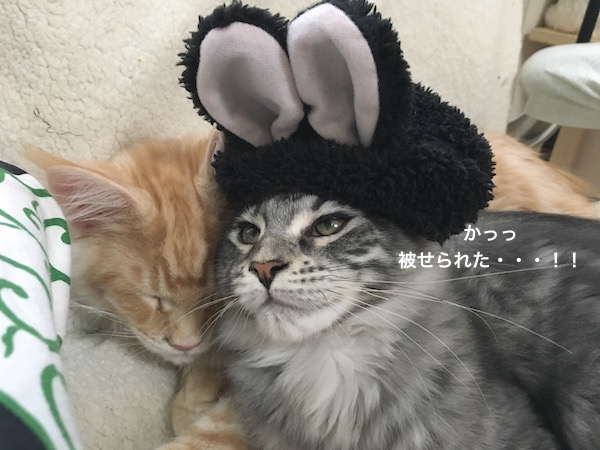 f:id:chikojirou:20180129214938j:plain