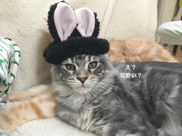 f:id:chikojirou:20180129215018j:plain