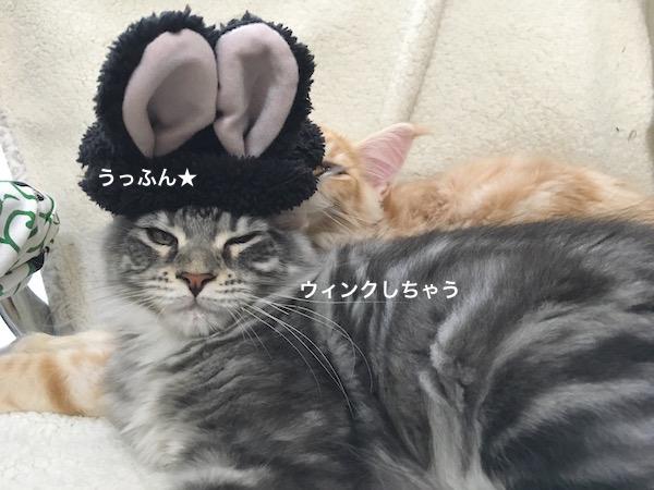 f:id:chikojirou:20180129215031j:plain