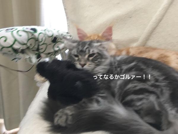 f:id:chikojirou:20180129215045j:plain