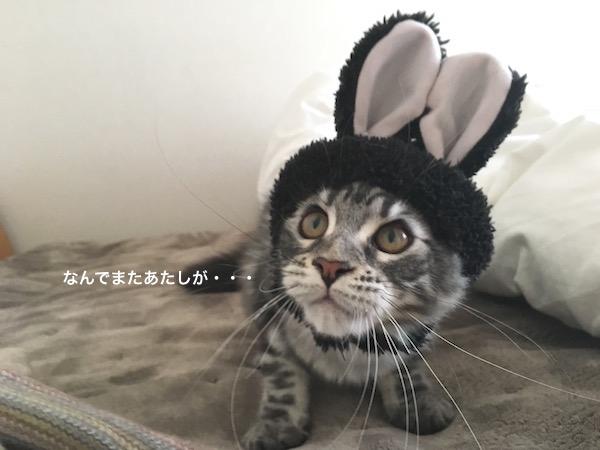 f:id:chikojirou:20180129215133j:plain