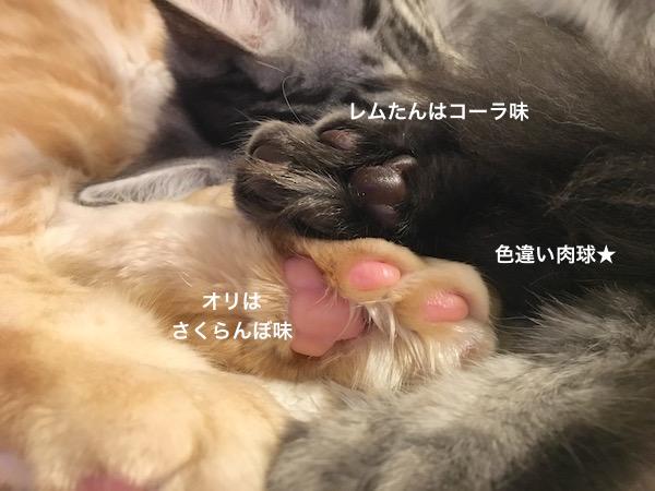 f:id:chikojirou:20180129215213j:plain