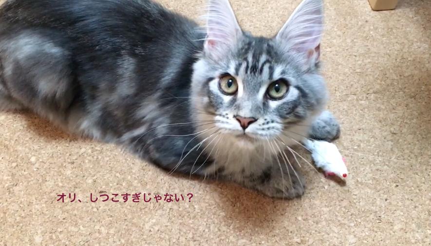 f:id:chikojirou:20180201170323p:plain