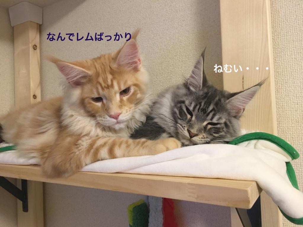 f:id:chikojirou:20180202221251j:plain
