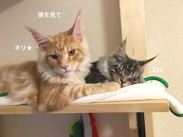 f:id:chikojirou:20180202221317j:plain