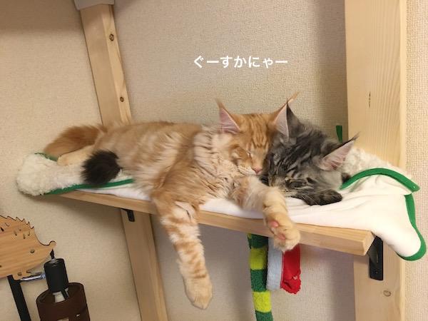 f:id:chikojirou:20180202221400j:plain
