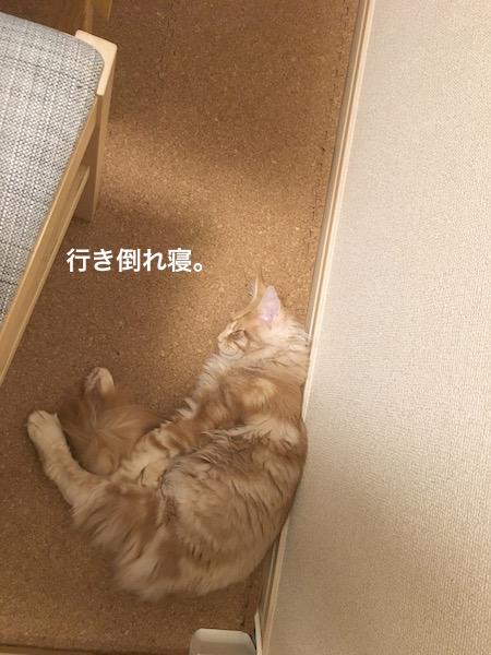 f:id:chikojirou:20180202221447j:plain