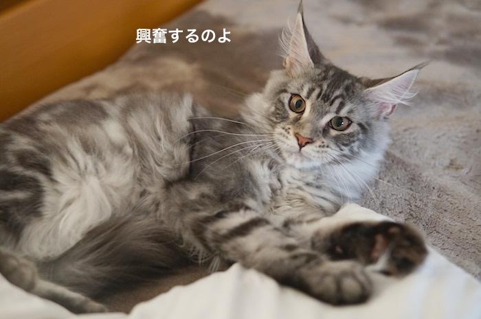 f:id:chikojirou:20180205214451j:plain