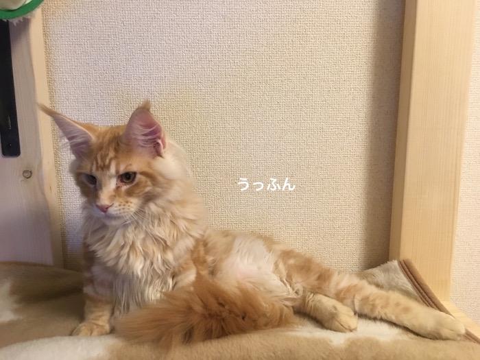 f:id:chikojirou:20180205214839j:plain