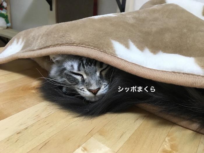 f:id:chikojirou:20180205215145j:plain