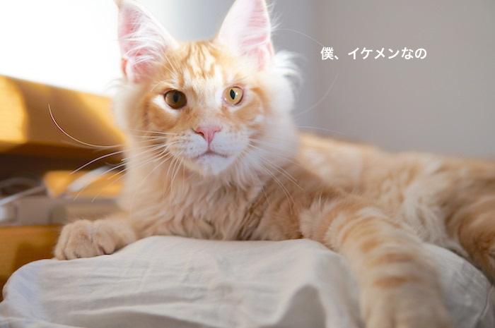 f:id:chikojirou:20180207223632j:plain