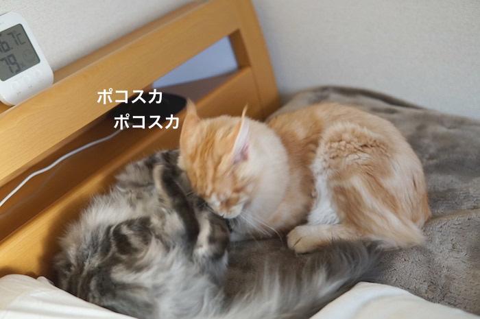 f:id:chikojirou:20180207223719j:plain