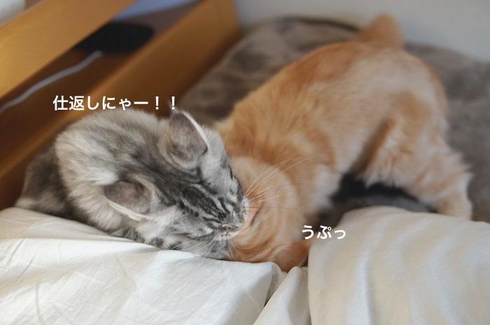 f:id:chikojirou:20180207223731j:plain